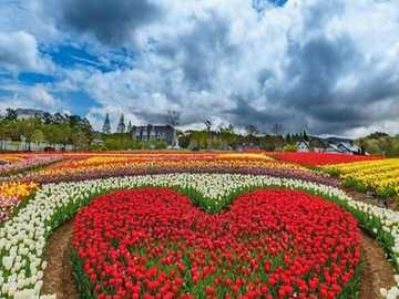 Tulipanowe serce. - Układanka: tulipanowe serce.