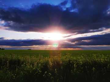 widok pola o zachodzie słońca - łóżko zielonych roślin liściastych. Ashbury Hill, Swindon SN6 8LZ, UK, Oxfordshire, Wielka Bryt