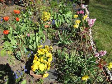 Wiosna w ogrodzie - wiosenne kwiatki......