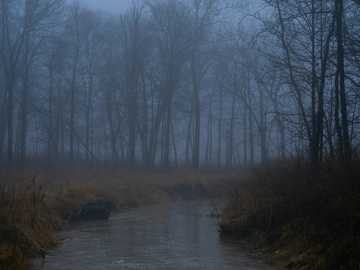 zbiornik wodny między drzewami - Jechałem do domu na przerwę na lunch, a mgła wyglądała dla mnie naprawdę fajnie, więc złapa�