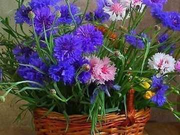 agropyre - bouquet de bleuets dans un panier