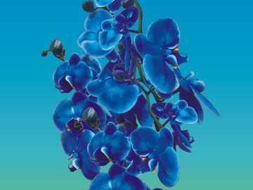 Orquídea - arreglar las flores