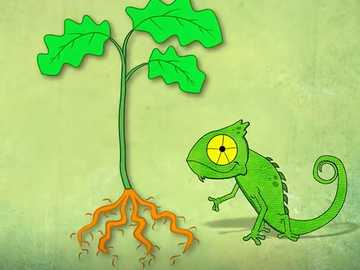 The parts of the Chameleon plant - Chameleon makes the puzzle of his plant.