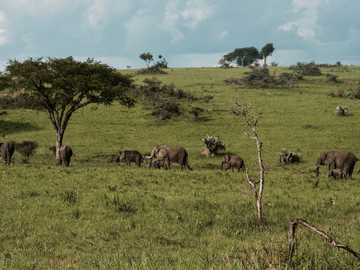 Horde von Elefanten - Die Herde zieht aus. Nationalpark Murchison Falls, Lolim, Uganda