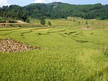 Pola ryżowe - Pola ryżowe na Dalekim Wschodzie