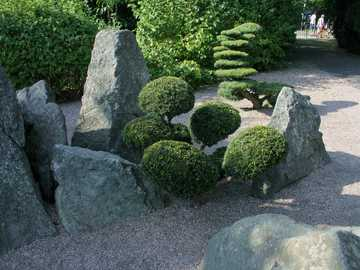 rockery - Rockery in the botanical garden