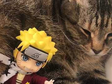 Naruto and his cat - Naruto adores his cat
