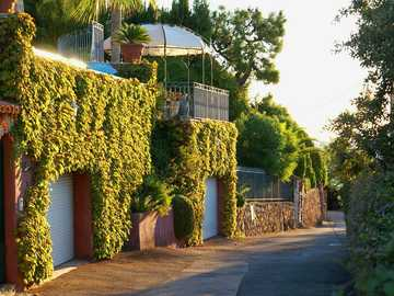 Wild wine - house covered with wild wine