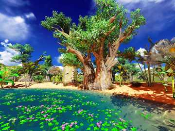 Madagaskar - Afrykański baobab, Afryka, Madagaskar, przyroda, wakacje, podróże
