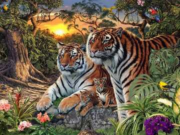 Tiger's family. - Puzzle: a tiger family.