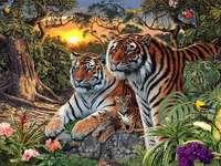 Семейството на Тигър.