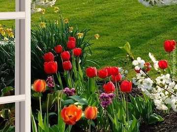 wiosna w ogrodzie - wiosna w ogrodzie - tulipany i kwitnące drzewa