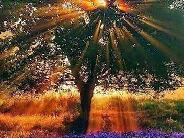 słońce w koronie - słońce w koronie i na łące kwiatów