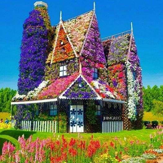 buntes Haus - Blumenhaus - Blumen sind überall