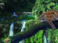 στο τροπικό δάσος του Αμαζονίου