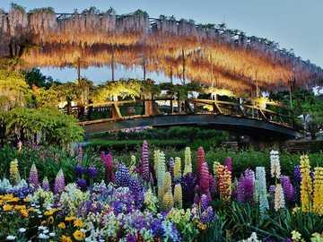 Park Kwiatowy Ashikaga - Spokojna kraina kwiatów. Chociaż Japonia jest najbardziej znana z kwiatów wiśni, glicynia jest w