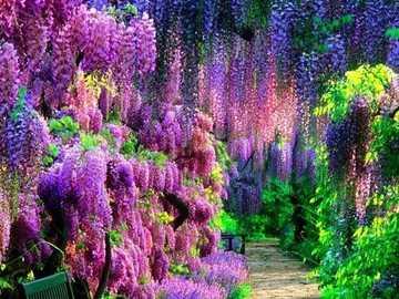 PARK KWIATOWY ASHIKAGA - Główną atrakcją parku jest japońska glicynia lub fuji po japońsku