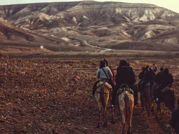 Skalista pustynia na koniu - kobieta na koniu w ciągu dnia. Negew, Izrael