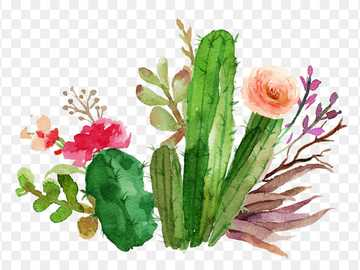 cactus online - you have to find the cactus