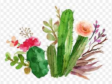 cactus en ligne - il faut trouver le cactus
