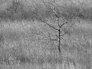 bezlistne drzewo na szarym polu - Z serii: Tylko o drzewach (więcej w moim albumie). Austria