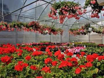 Giedlarowa plant nursery - Giedlarowe nursery of decorative plants
