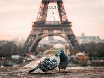 Miłość jest życiem - stwórz własny świat, aby żyć tak, jak chcesz ......