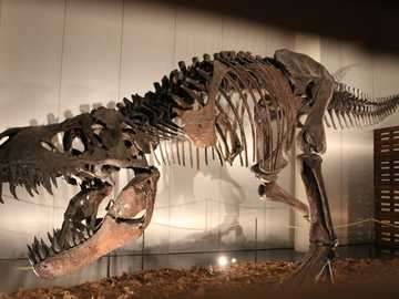 fossil dinosaur - Images may be protected by copyright