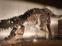 fosszilis dinoszaurusz