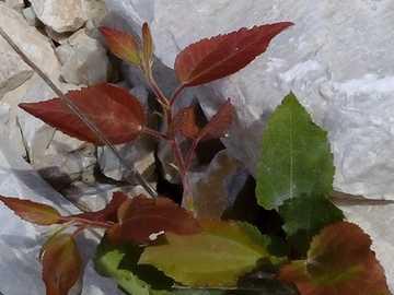 W skale - Roślina między białymi skałami
