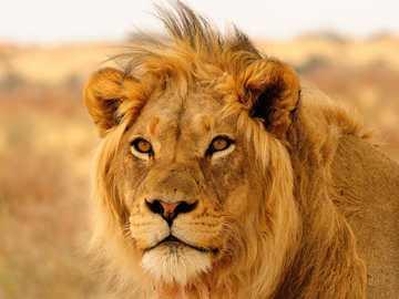 Spróbuj rozwiązać zagadkę z dzikimi zwierzętami - Ciesz się podczas rozwiązywania zagadek ze zwierzętami