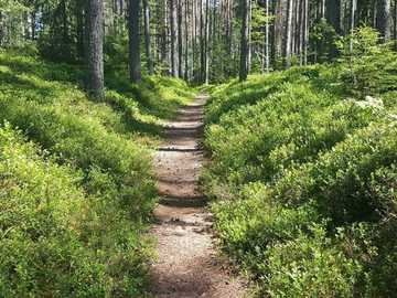 A trail in the forest - green grass and trees during daytime. Sweden