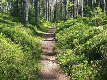 Szlak w lesie - zielona trawa i drzewa w ciągu dnia. Szwecja