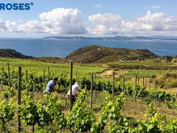 Bay of ROSAS - Vineyard, sea, clouds, sun, wine