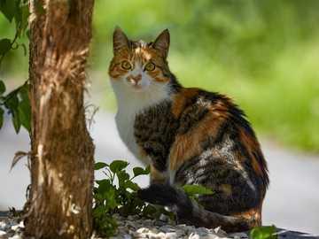 Dulce gato - gato blanco y negro marrón en el tronco del árbol. Alikon, Sins, Suiza