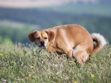 The dog makes a kangaroo - A dog in the bosom of nature makes a kangaroo.