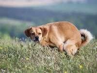 O cachorro faz um canguru - Um cão no seio da natureza faz um canguru.