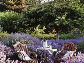 In the garden .... - In the garden ...............
