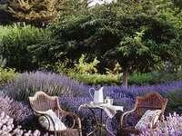 No Jardim ....