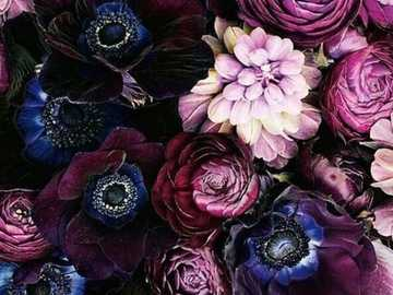 Kwiaty :) - Kwiaty ...................................