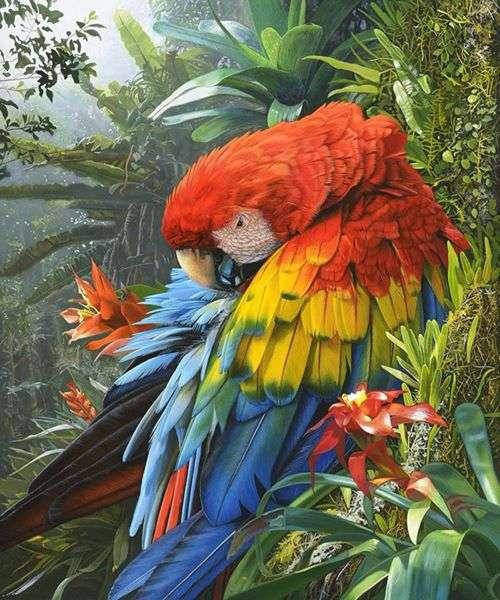 Loro colorido - Pájaro: loro colorido (9×11)