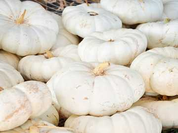 pile of pumpkin lot - White pumpkins at the pumpkin patch. It's Autumn!. Parkhurst Pumpkin Patch, South Henney Road,