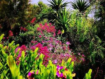 Zahrada --- - květiny - keře - palmy - barva