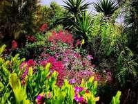 Jardim --- - flores - arbustos - palmas - cor