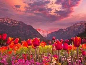 Flowers at the foot of the mountains. - Puzzle: flowers at the foot of the mountains.