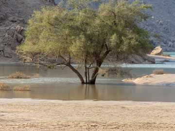 brown tree near body of water during daytime - A lone green tree in a flooded wadi or lake in the United Arab Emirates (UAE) aafter a flood and sto