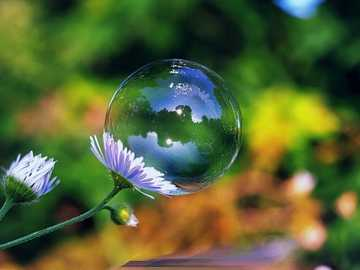 Daisies And Soap Bubble - Daisies And Soap Bubble.