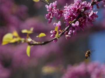 Blossoms and Bees - brown bee near cherry blossom plant selective focus photo.