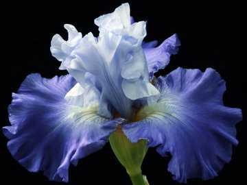 """flor azul - Imagen de <a href=""""https://pixabay.com/es/users/principeiris-17177505/?utm_source=link-attri"""
