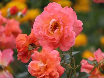 "salmon pink - Imagen de <a href=""https://pixabay.com/es/users/manfredrichter-4055600/?utm_source=link-attr"